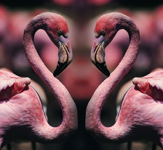 """Оригинал - Схема вышивки  """"Розовый фламинго - триптих """" - Схемы автора  """"rybka6 """" - Вышивка крестом."""
